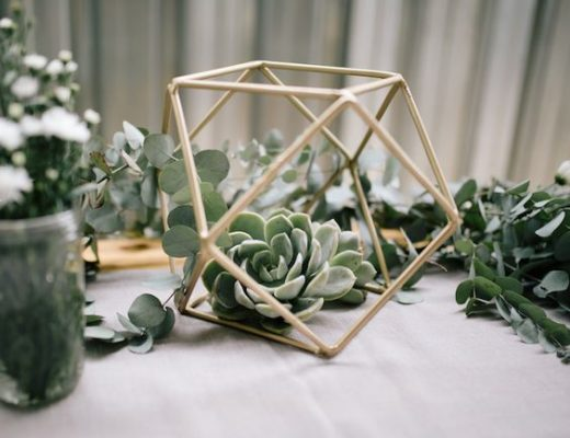 Sukulenty w terrarium