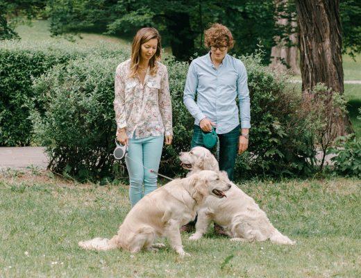 Pokażcie swoich ulubieńców - sesja narzeczeńska z psami!